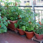 How Will Landscapers Preserve Your Garden?